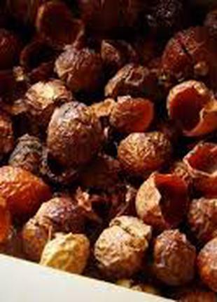 Мыльный орех