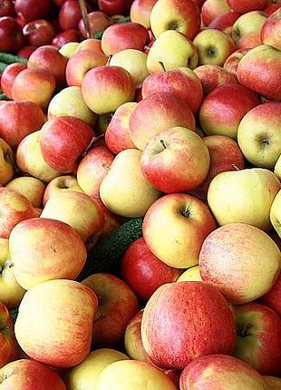 Повидло яблучне / повидло вишневе/ джем/ повидло/ варення/повидло