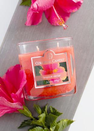 """Colonial candle ароматическая свеча """"тропический нектар"""". прои..."""