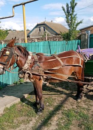 Продам лошадь-ишока