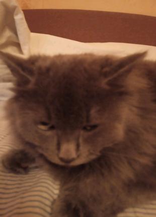 Пропал кот в районе ул Пражская, 25