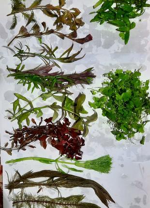 Аквариумные растения, набор