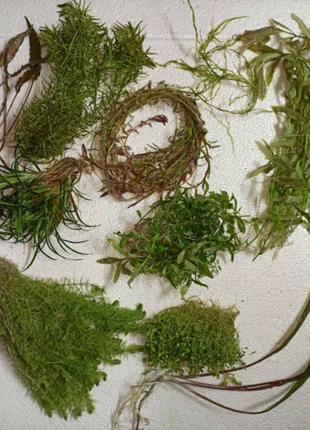 Большей набор аквариумных растений
