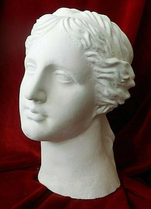 Голова Венеры.