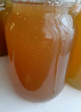 Мед липа