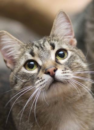 Отдам в хорошие руки молодого котика Тиграна
