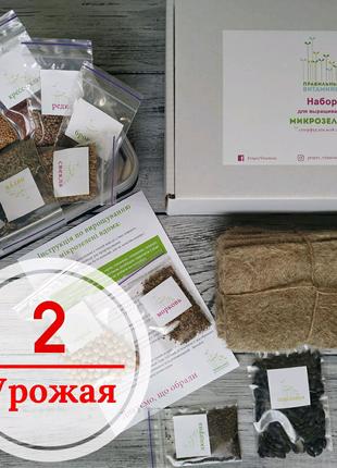 Наборы для выращивания микрозелени дома Микрогрин microgreen
