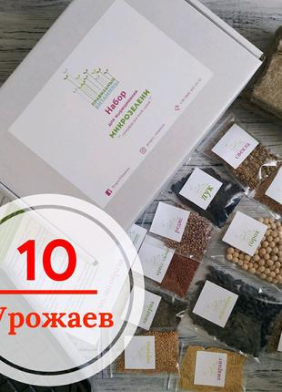 Выращивай микрозелень дома на подоконнике Микрогрин microgreen