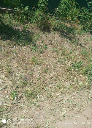 Покос травы мотокосой