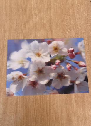 Трехмерная живая 3d картинка меняется под углом вишня в цвету