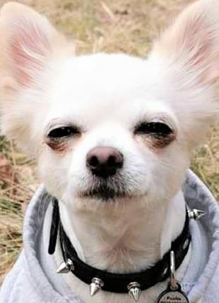 """Ошейник шипами """"Lockdog"""" на маленькую собаку черный"""