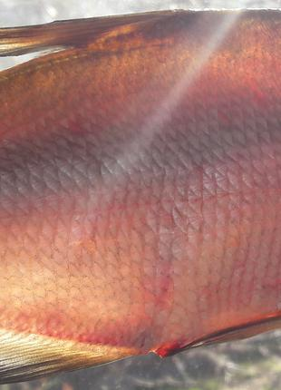 Вяленая рыба (густера, синец, плотва) 150 грн./кг