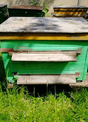 Улей с пчелами, пчелопакеты