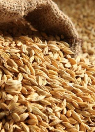 Пшеница - ячмень! 4 гр/кг.