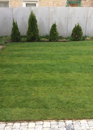 Газон, посевной газон, рулонный газон под ключ , обслуживание уча
