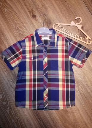 Коттоновая рубашка, тенниска, шведка для мальчика marks&spencer