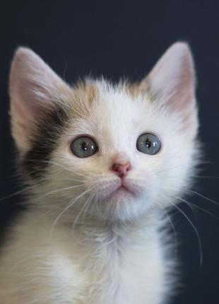 Отдам в хорошие руки котенка девочку Юнити