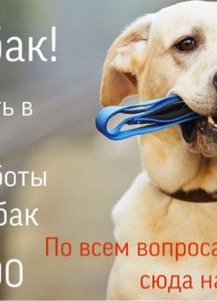 Выгул собак с любовью)))