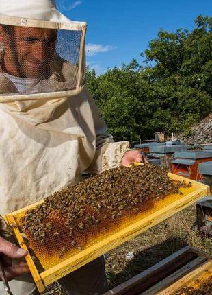 Семьи пчёл для пчеловода, Винницкая обл