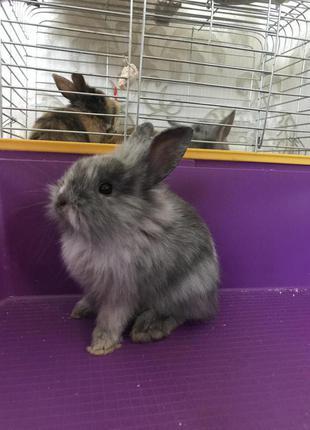 Продам декоративных кроликов