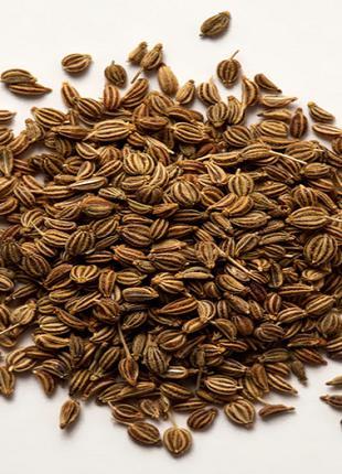 Эфирное масло Ажгон (Trachyspermum ammi) Оптом От 1 Кг