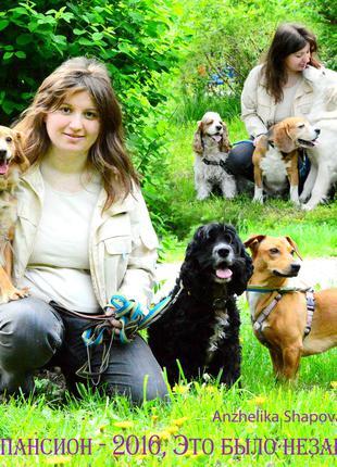 Зоогостиница, гостиница/пансион/передержка для собак (животных) о