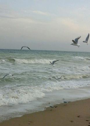 Сдам посуточно комнаты у моря Одесса Люсдорф (Черноморка)