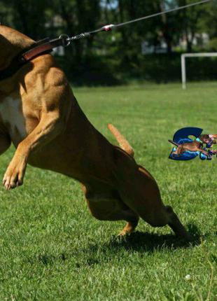 Щенок питбуль АПБТ редноуз, клубный щенок