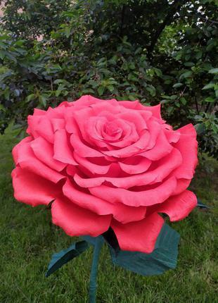 Троянда ростова червона