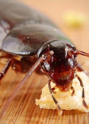 Супер средство от тараканов