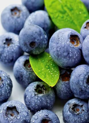 Голубика свежая ягода