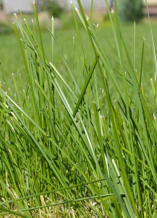 Покос травы быстро и качественно любые объемы