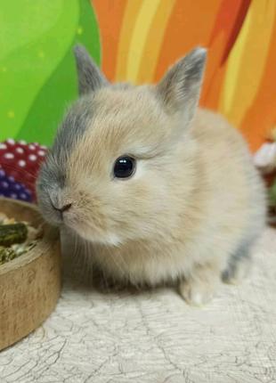 У нас вы можете выбрать крольчонка с документами