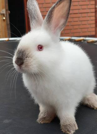 Кролик супер