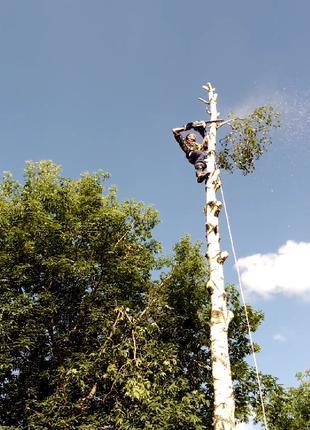 Спил сложны и аварийных деревьев