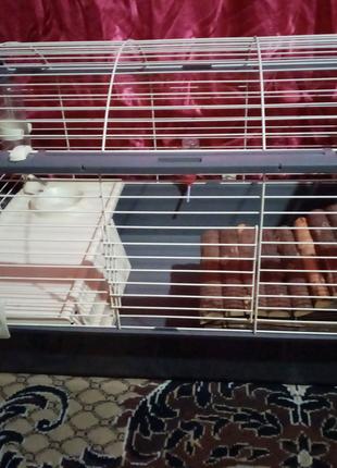 Клетка для кроликов домашних