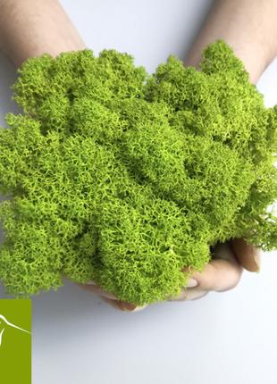 Стабилизированный мох ярко салатового цвета. Материал для декора