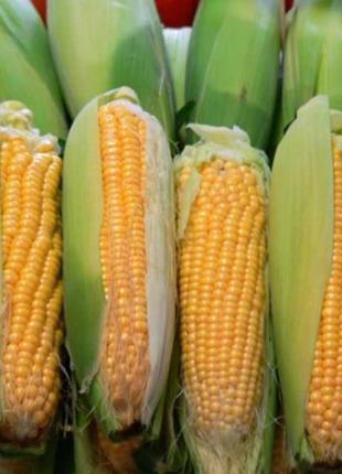 Семена кукурузы ТАР 349