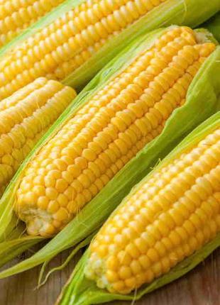 Семена кукурузы ХМЕЛЬНИЦКИЙ 298