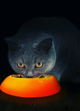 Светящиеся кормушка для котов и собак