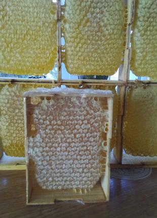 Сотовый мёд ,мёд акация, подсолнечник