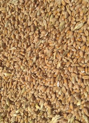 Продам  пшеницу. 2 тонны. 4000 грн/т.