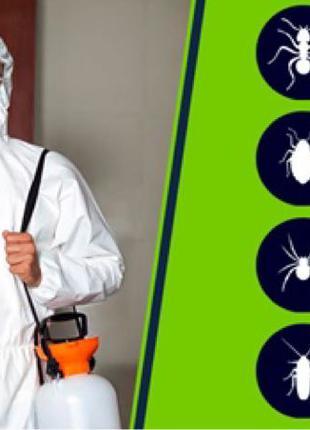 Дезинсекция, Уничтожение насекомых, тараканов, клопов, грызунов