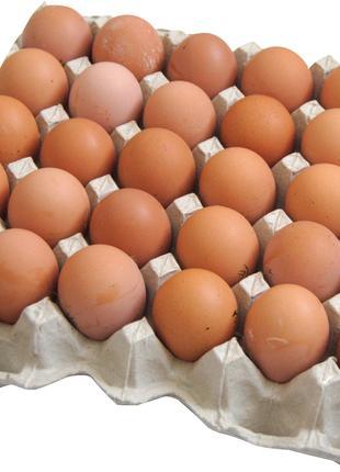 Птицефабрика реализует яйцо