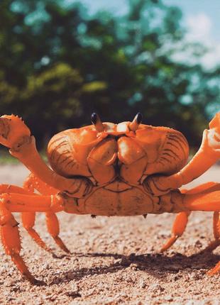 Продам Краб Крабы Морской Живые морепродукти