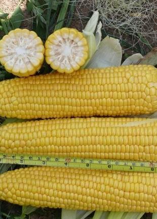 Сладкая кукуруза Тайсон