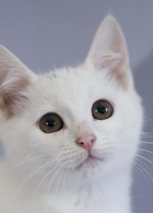Отдам в хорошие руки котенка девочку Зефирку