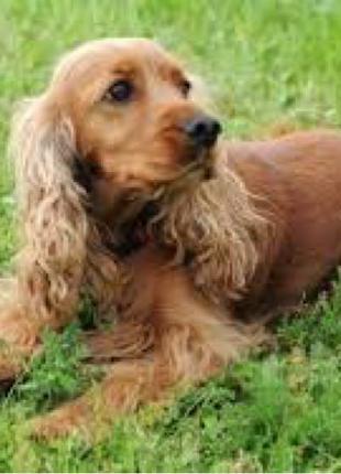 Дрессировка собак описание читаем внимательно
