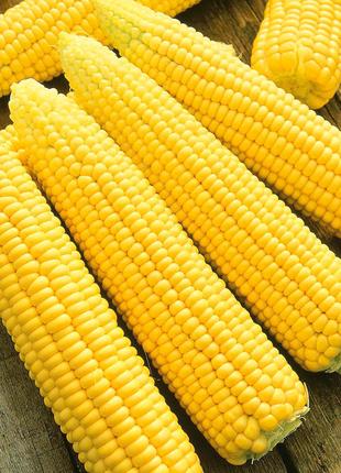Сахарная кукуруза.