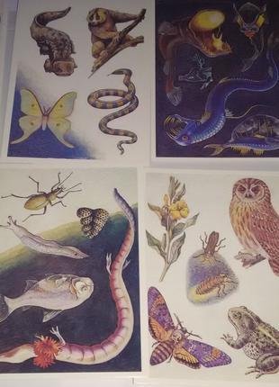 "Комплект открыток 16 шт ""Природа после захода солнца"""